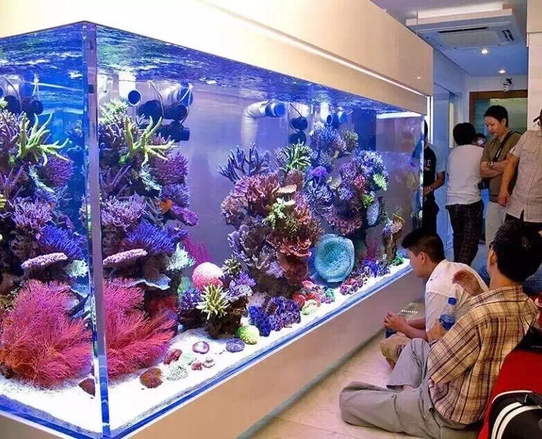 Customized Size Large Acrylic Fish Aquarium Tank