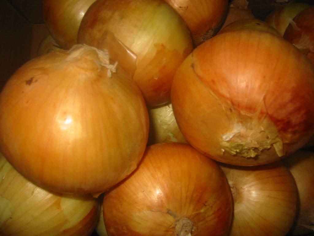 Tor Onion Sites