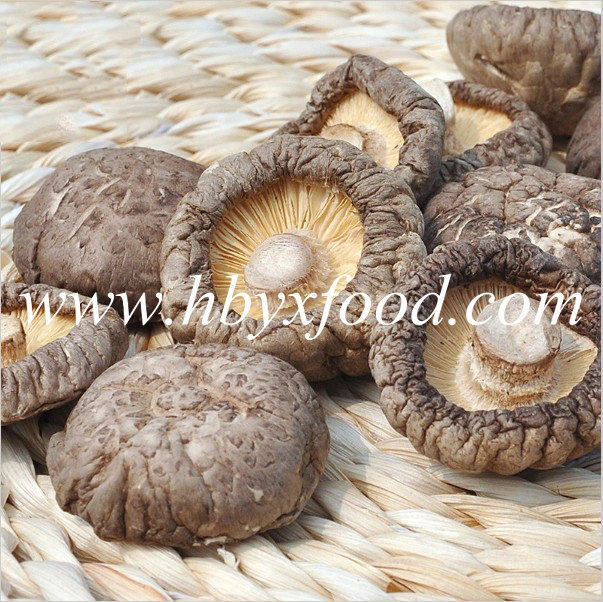 Famous Chinese Food Organic Dried Smooth Shiitake Mushroom