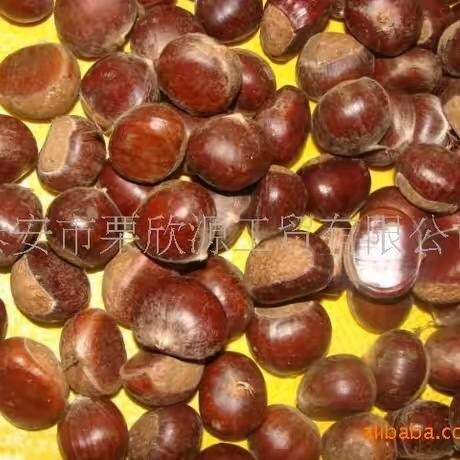 2016 New Export Organic 40-60 Fresh Chestnut
