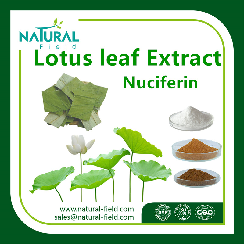 100% Herbal Extract/ Natural Lotus Leaf Extract