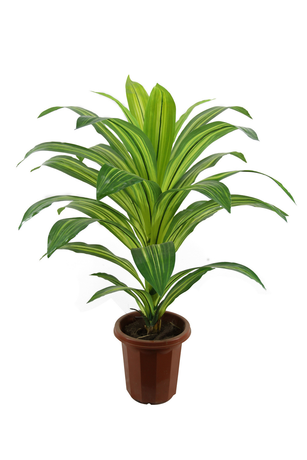 1000 images about houseplant wishlist on pinterest for Maintenance of indoor plants