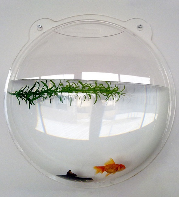 Fish tanks wall mounted images for Wall fish bowl