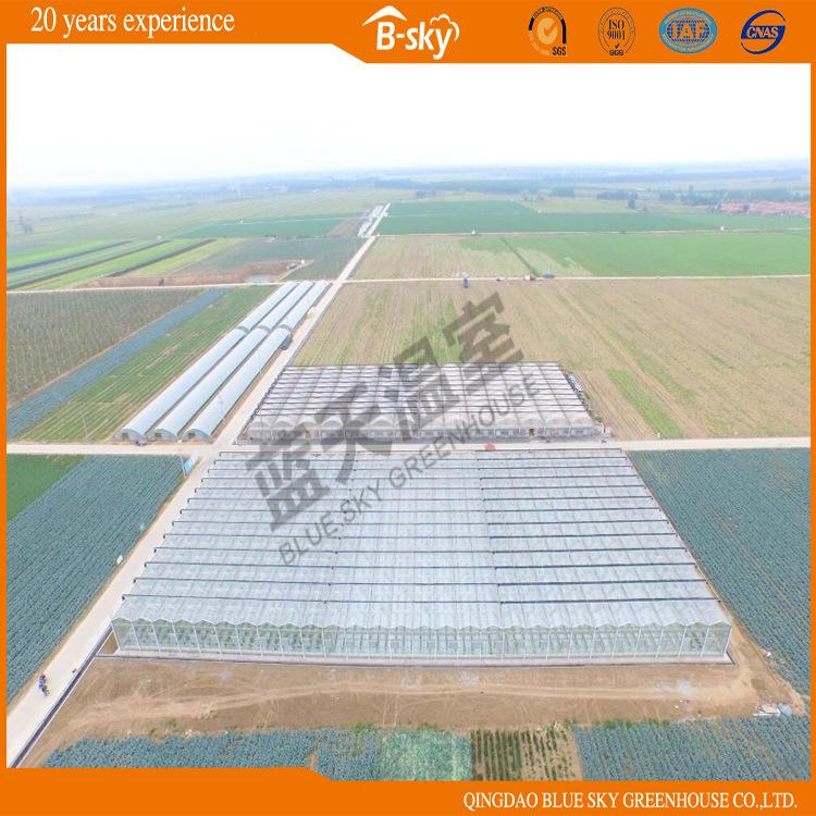 Long Life Span Glass Multi-Span Greenhouse