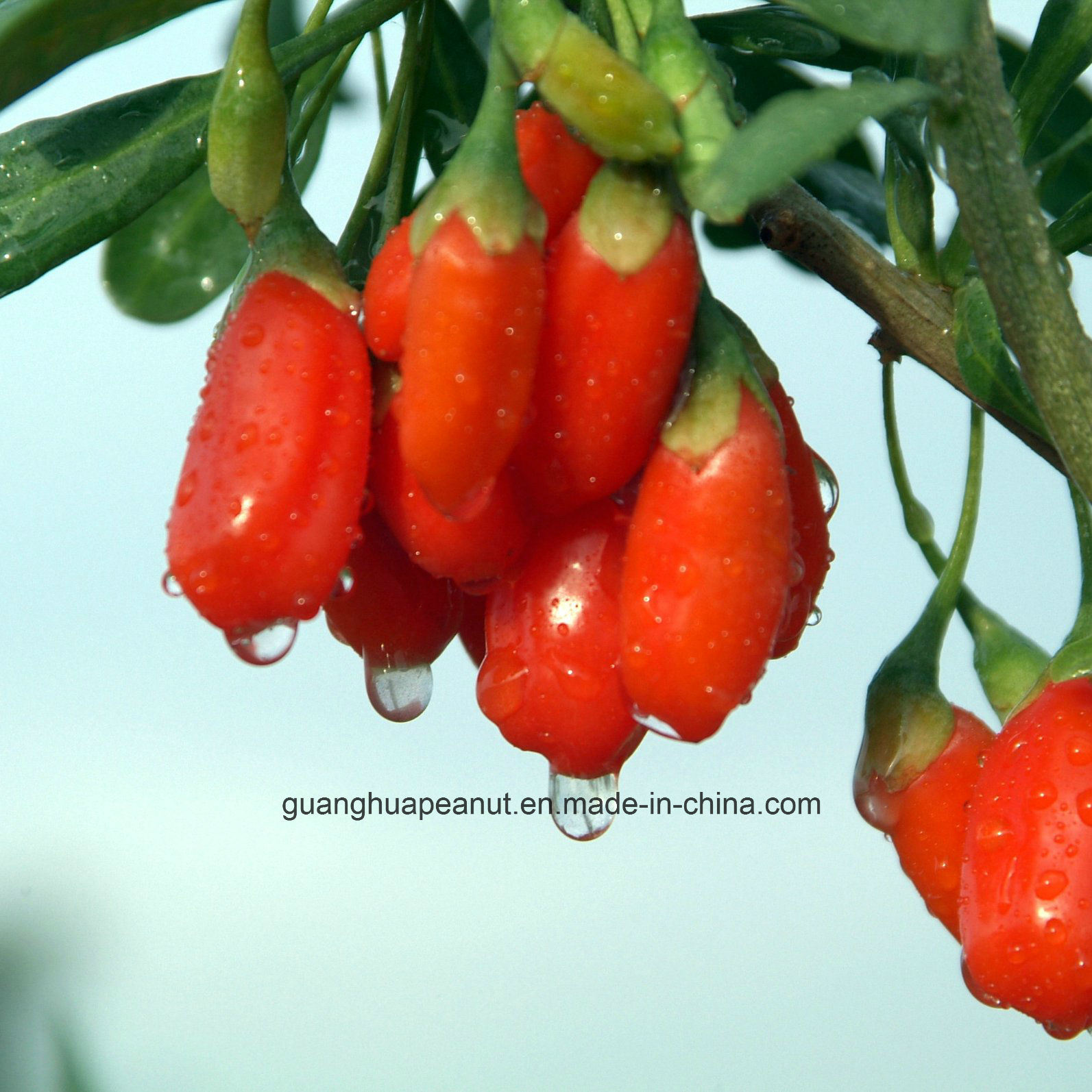 Perfect Hot Sale Dried Goji Berry From China