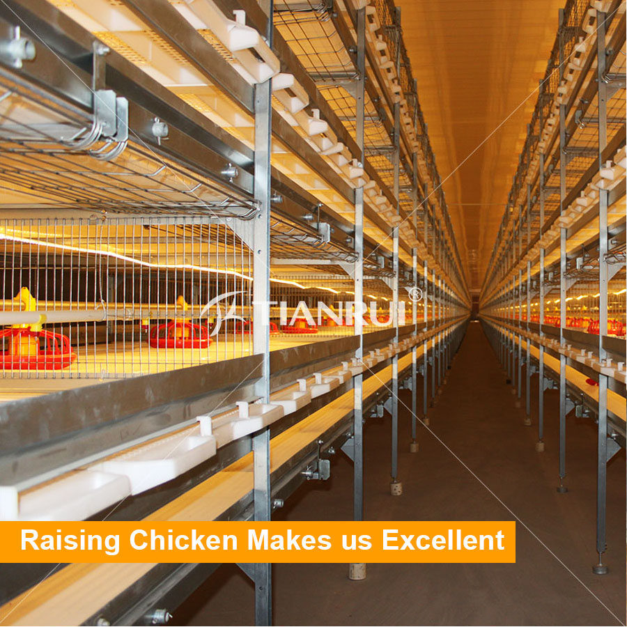 Tianrui Design H Type Good Quality Automatic Chicken Broiler Cage System