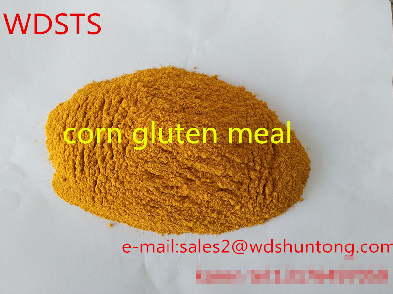 Corn Gluten Meal for Fodder with High Protein