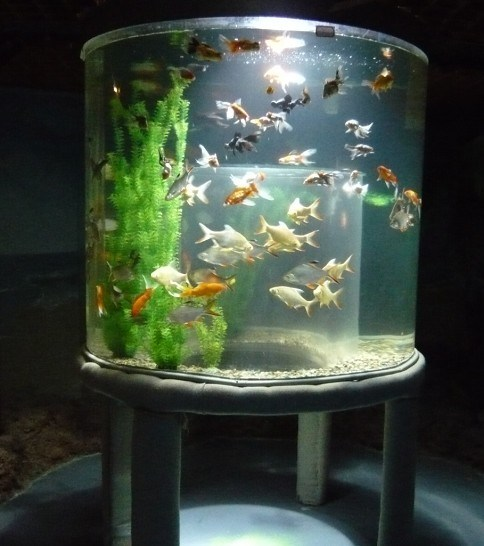 China acrylic fish tank china acrylic tank fish tank for How to build an acrylic fish tank