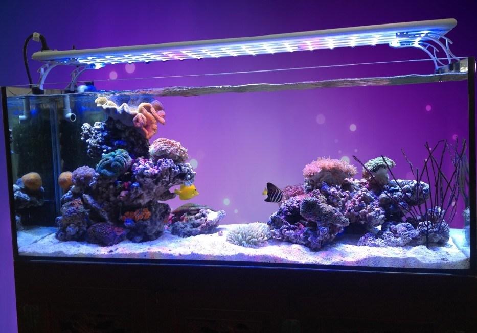 Luce dell 39 acquario di simulazione led tramonto di alba per for Led per acquario