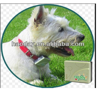 162101327079 together with Product xt 013 Gps Tracker Newest 2014 Fashionable Collars For Dogs Cats Waterproof Real Time Location Updates Mini Gps Tracking Device eihgryihg as well KV200 as well Tagg Pet Gps Plus Collar furthermore 813844 32394341231. on gps tracking for dogs