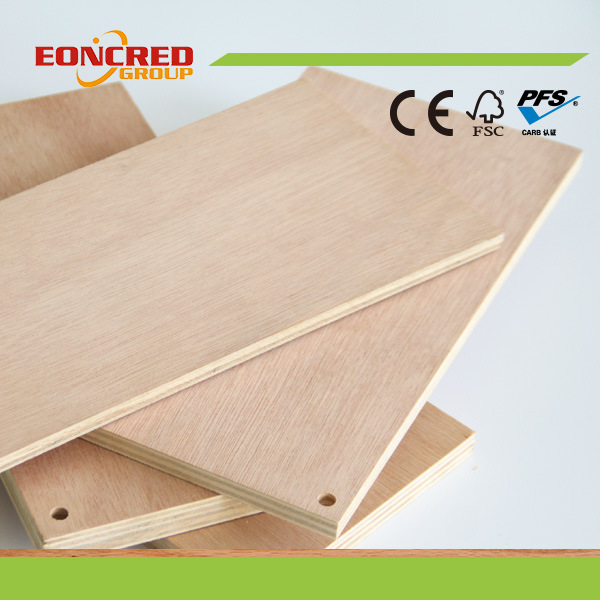 Betulla legno duro