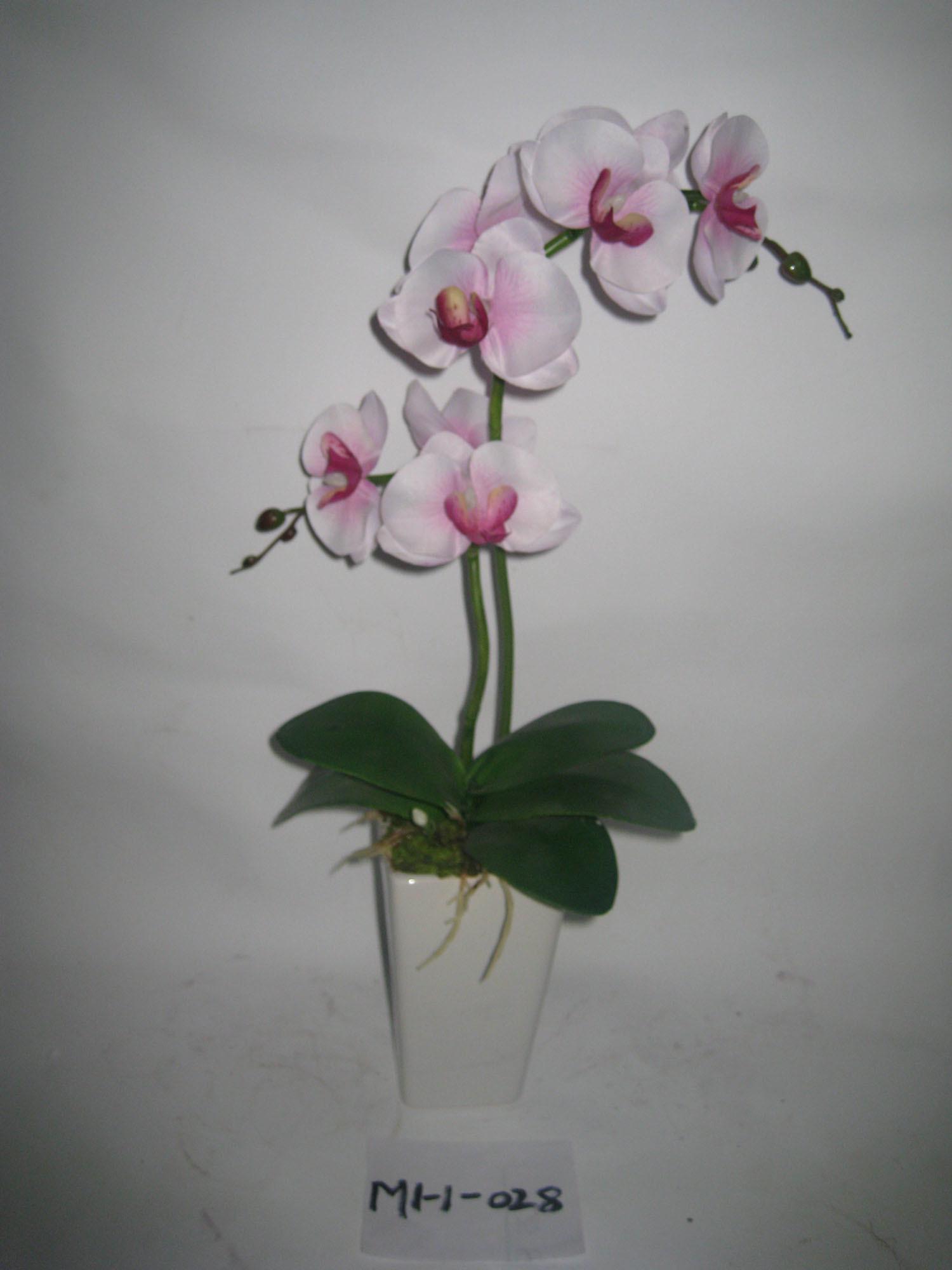 Orchidea dei 2012 una nuova gambi di stile due artificiale for Nuovo stelo orchidea