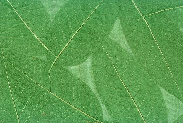 Papel pintado de la verde hoja d 9001 papel pintado de for Papel pintado hojas verdes