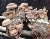 Smooth Dried Shiitake Mushroom with Nice Vacuum Package