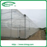 Insect net greenhouse for agriculture used