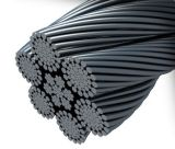 Galvanized and Ungalvanized Steel Wire Rope (6*37+FC)