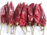 American Red Chili