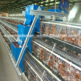 Hot Sale Automatic Chicken Cage for Layer