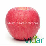 Golden Supplier of Fresh Red FUJI Apple