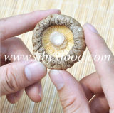 Edible Champignon Stemless Dry Smooth Surface Mushroom