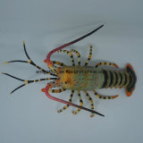 High Quality Fashion Cute Lobster Toys