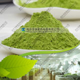 Factory Price Free Sample Young Barley Grass Powder