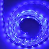 LED Article lights 5050(m/60lights)