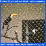 Stainless Steel Bird′s Web