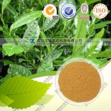Catechu Extract Factory with Good Price and Quality