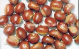 New Crop Chinese Fresh Chestnut