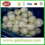 Fresh White Peeled Onion with vacuum Pack