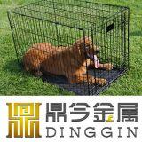 Large Golden Retriever Dog Carrier