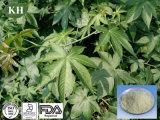 Sweet Tea Extract Rubusoside 40%~75% / Sweetener Rubus Sravissinus Extract