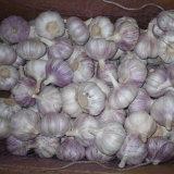 New Crop High Quality Chinese Garlic