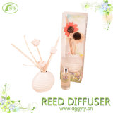 Essenza Reed Diffuser with Sola Flower in Ceramic Bottle
