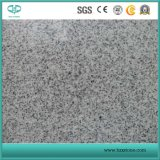 Grey Granite/ Polished G682/G654/G603/G664/G687/G439/G562 White/Black/Grey/Yellow/Red/Pink/Brown/Beige/Green Stone Granites