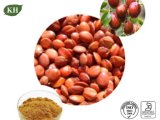 Spine Date Seed Extract; Saponins 2% Zizyphus Vulgaris Extract