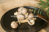 Pollution-Free Dried Vegetable Tea Flower Mushroom Producer