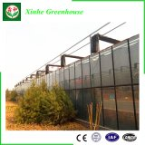 China Glass/Tempering Glass/Float Glass Greenhouse for Vegetables/Flowers