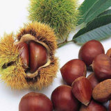 Fresh Chinese Chestnuts with Best Price