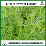 Natural Chinese Herb Clivers / Common Bedstraw Powder Extract with Spec. 5: 1-20: 1