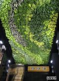 vertical garden and green wall