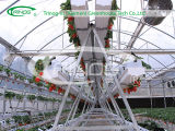 Strawberry Soiless Growing System hydroponic for Sale