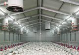Steel Frame for Warehouse&Workshop/Steel Structure Poultry House