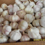 10kg Carton of Fresh White Garlic