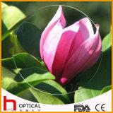 1.499 Single Vision 55mm Optical Lens Hc