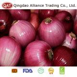 Peeled Purple Onion with New Crop