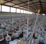 Automatic Poultry Farm Machinery for Broiler Chicken Farm