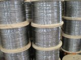 AISI304, 7x7-2.0mm Wire Rope (1960n/Mm2, Mbl-310kg)