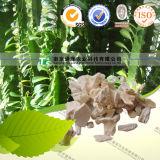 100% Pure Natural Herb Medicine Ossa Draconis